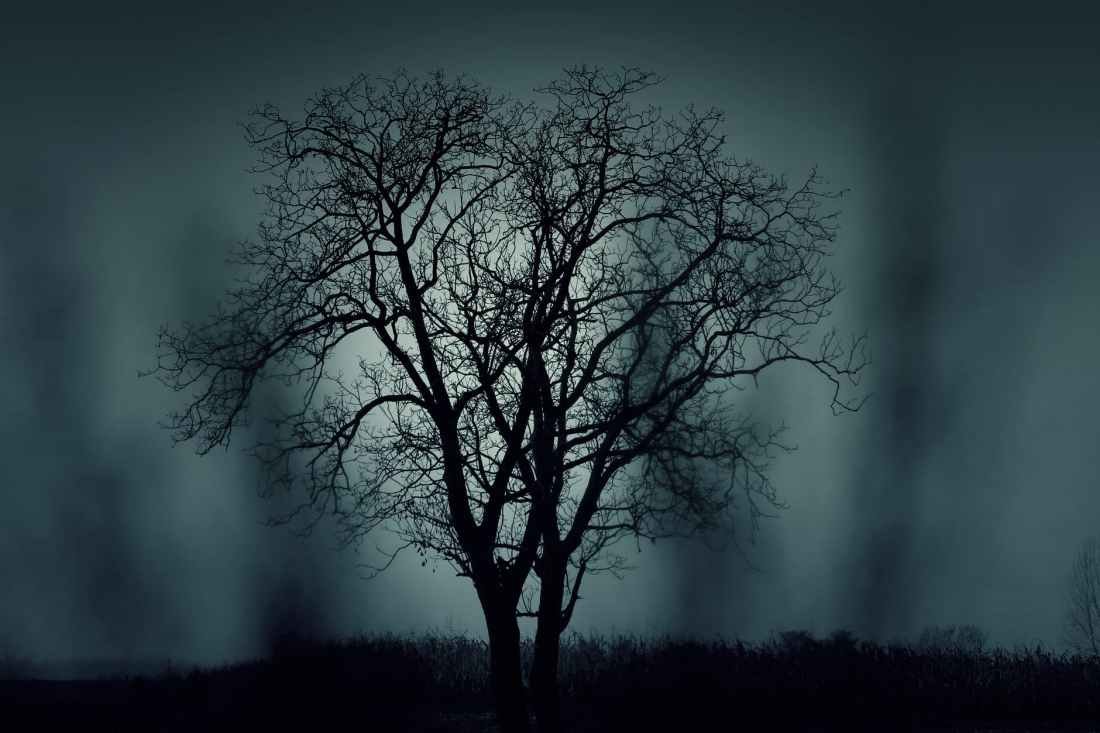dark nature night tree